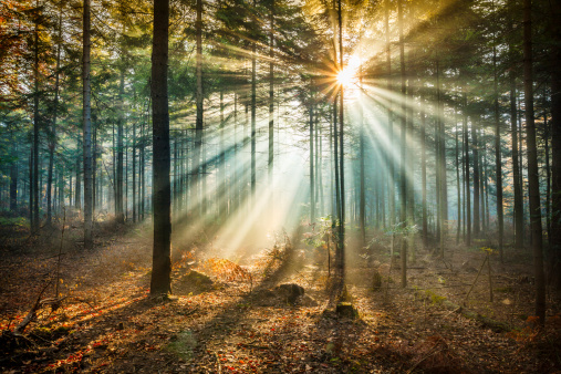 Star-like flare and Sun Beams - Misty forest
