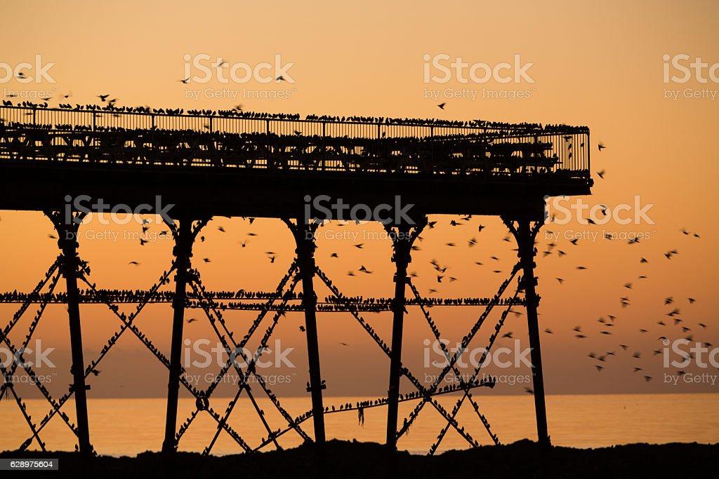 Starling murmuration around a pier. stock photo