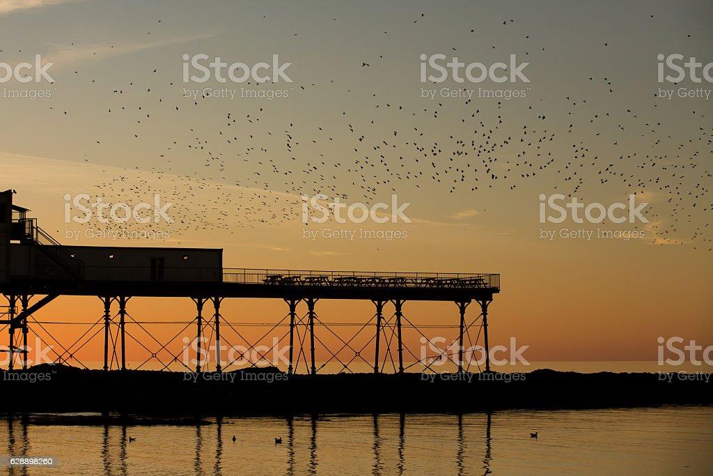 Starling murmuration over Aberystwyth Pier stock photo