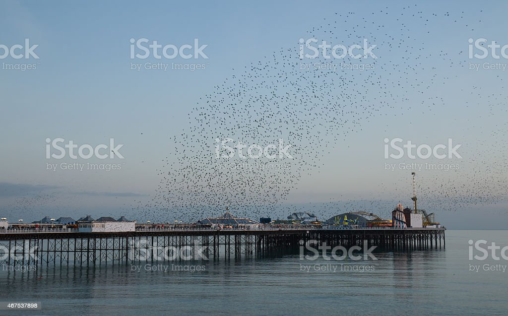 Starling Murmuration Over Brighton Pier Stock Photo More Pictures