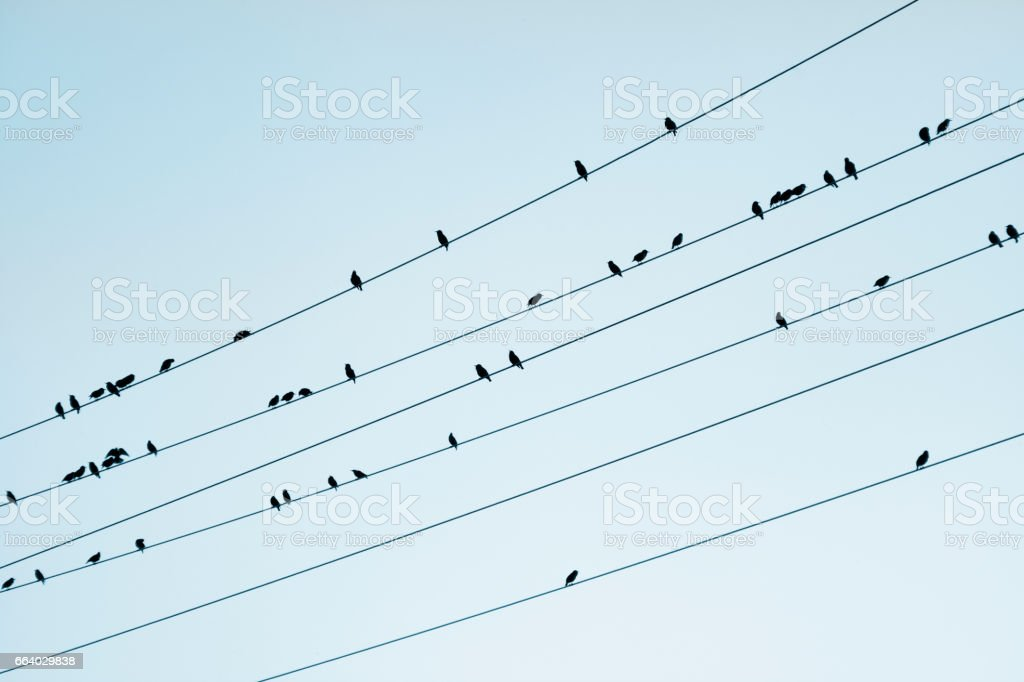 Starlings on wires, blue sky background. stock photo