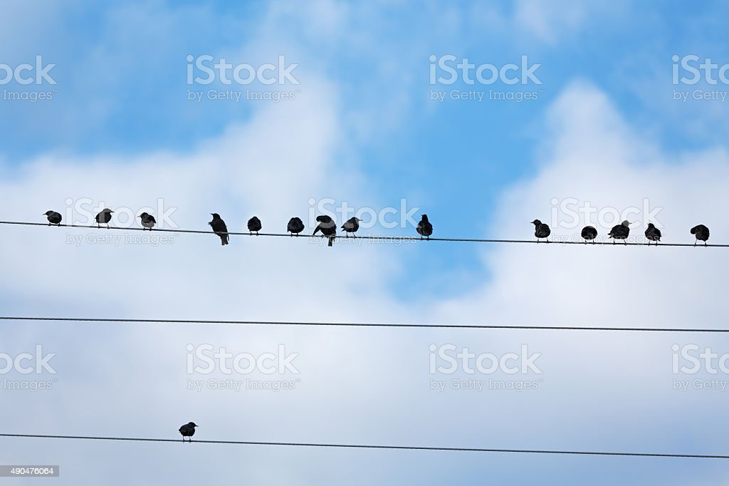 starlings stock photo