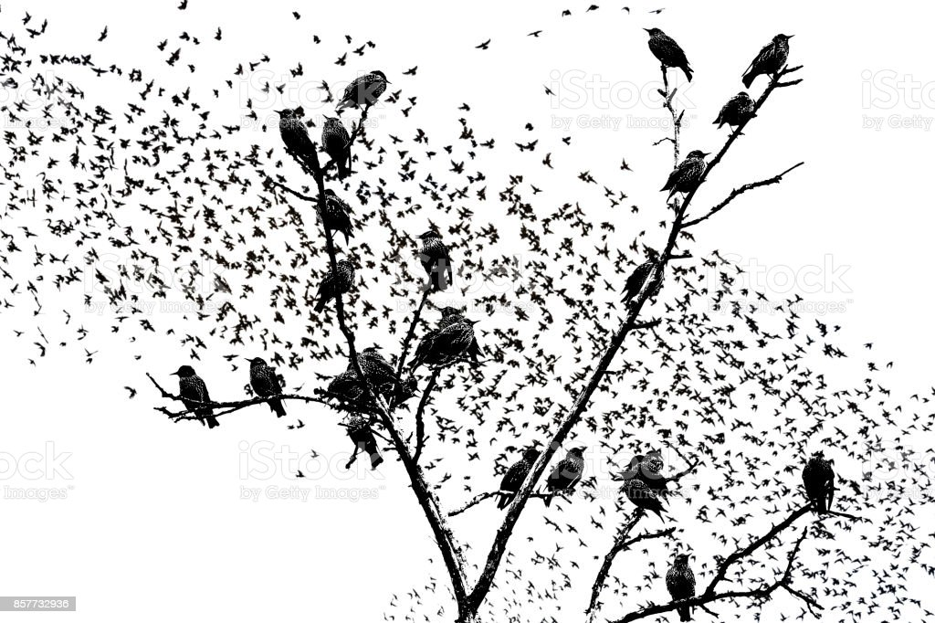 starlings sitting on the branches of raster graphics stock photo