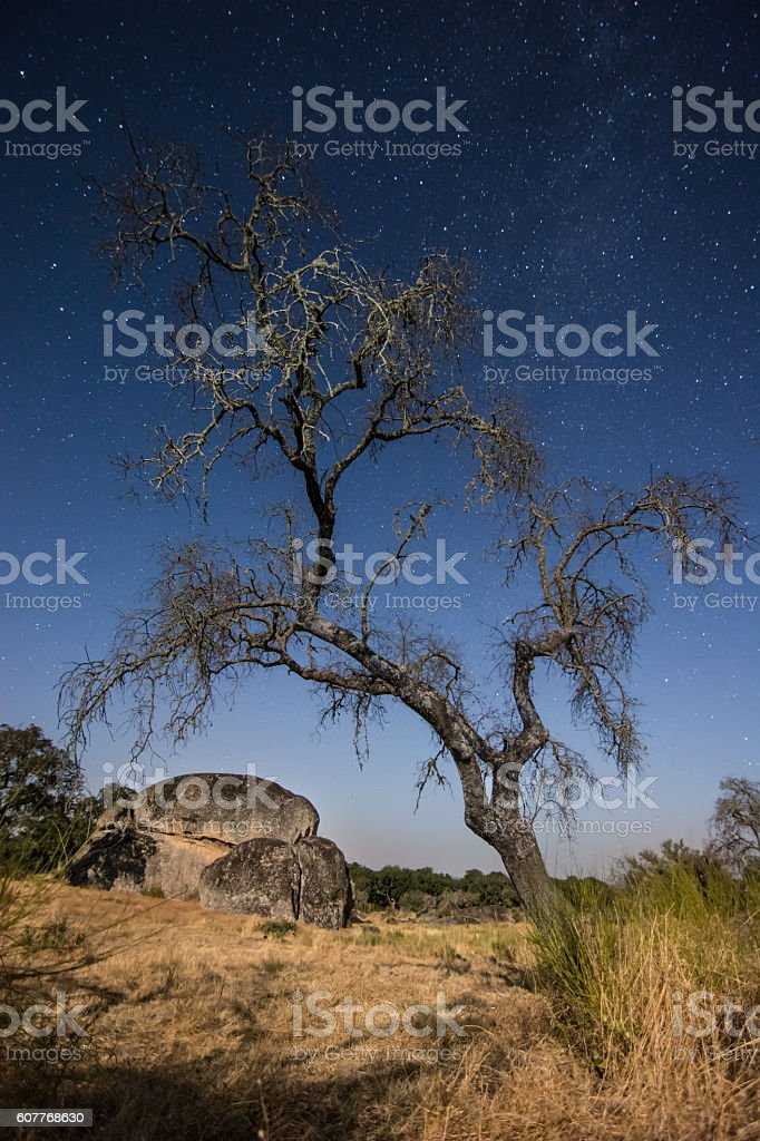 starry night at African savanna with large rock and tree stock photo