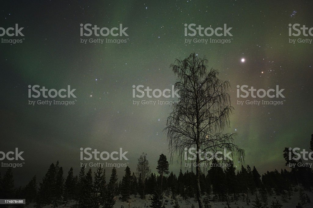 Starry sky above boreal forest royalty-free stock photo