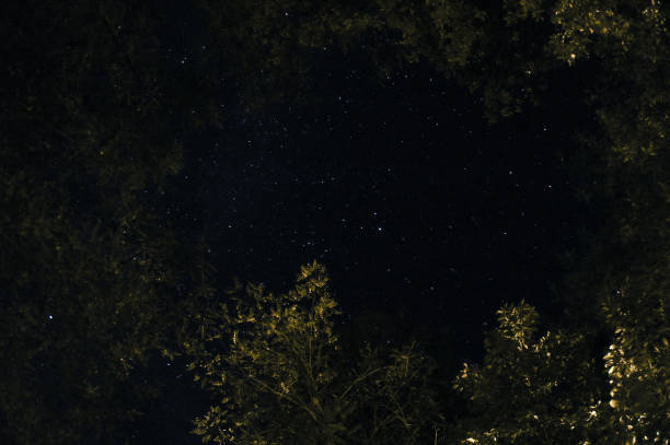 cielo estrellado enmarcado con hojas y ramas de árboles - foto de stock