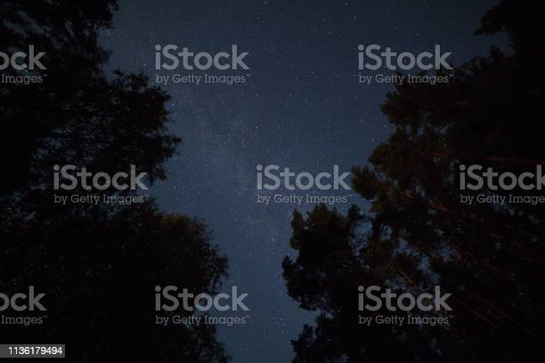 Photo of Starry sky in the forest
