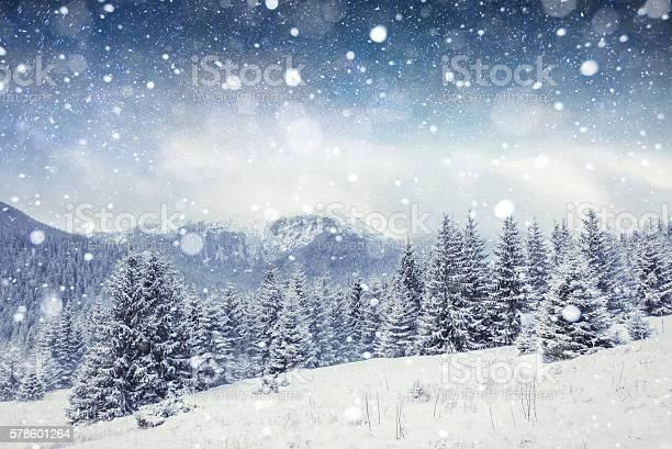 Photo of starry sky in winter snowy night. Carpathians, Ukraine, Europe