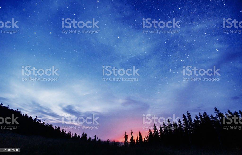 Sternenhimmel durch die Bäume – Foto