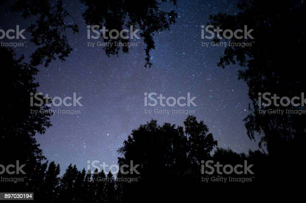Photo of Stars above boreal forest