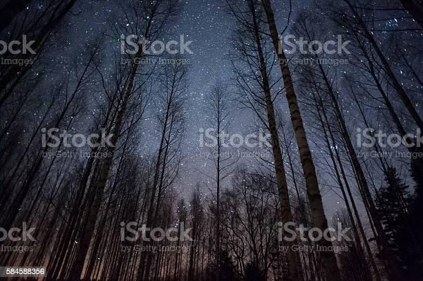 Photo of Stars above treetops
