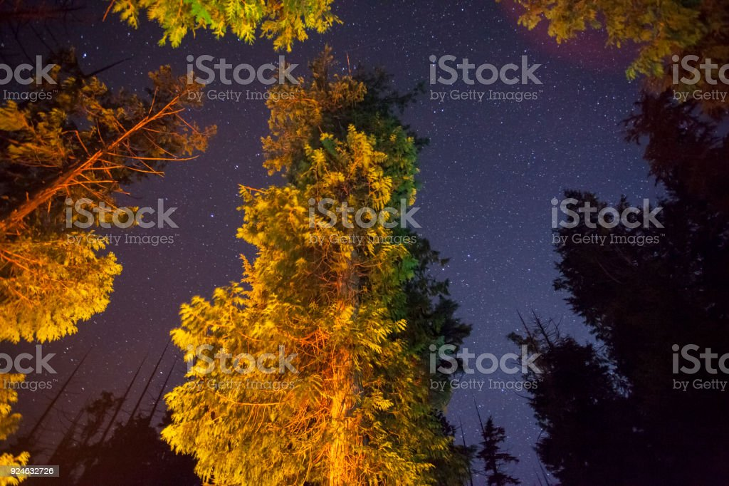 stars and trees stock photo