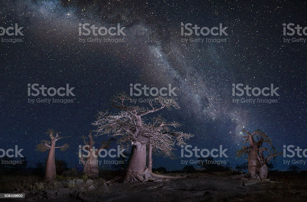 Stars over baobabs stock photo