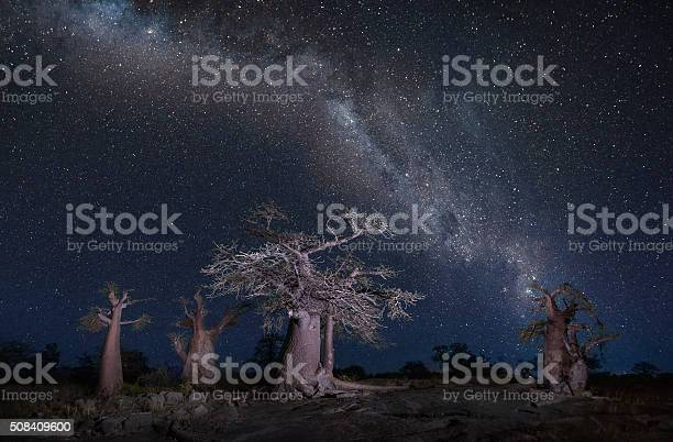 Photo of Stars over baobabs