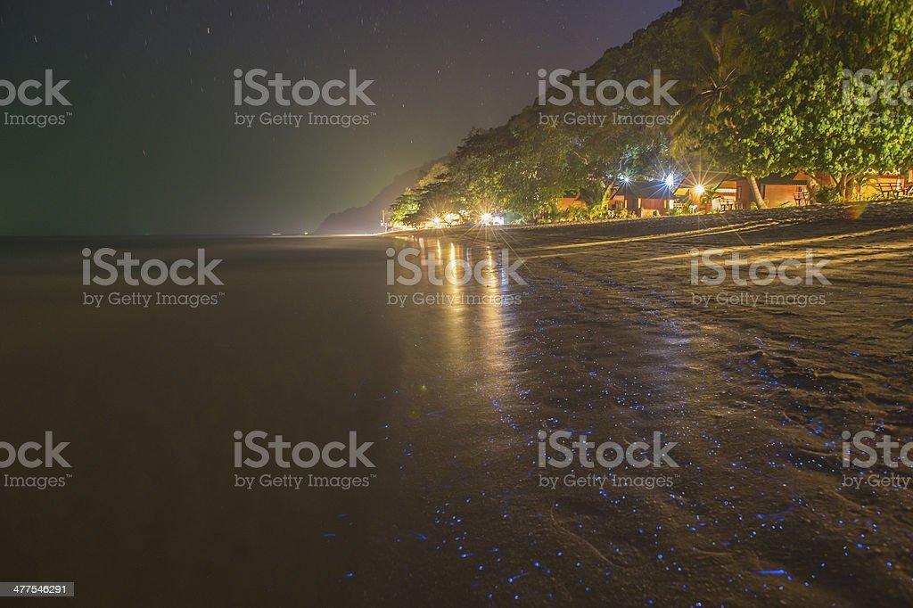 fluoresce plankton in the night ocean
