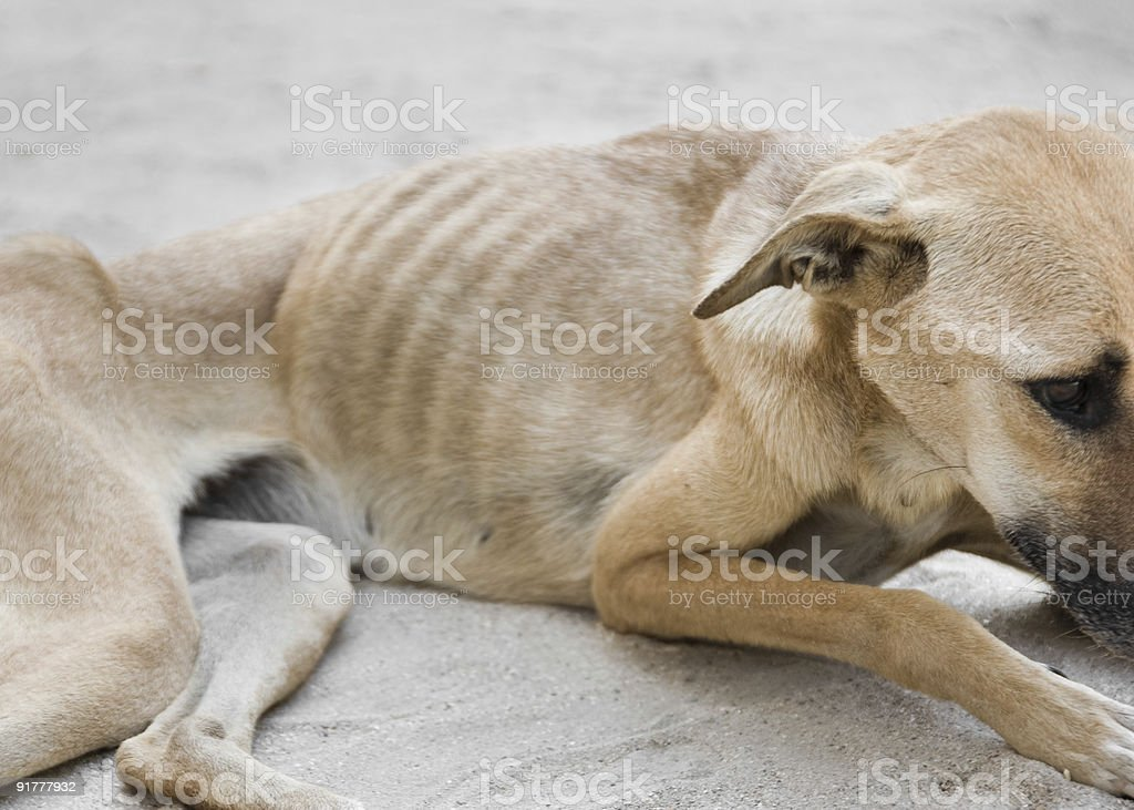 Starving Dog stock photo