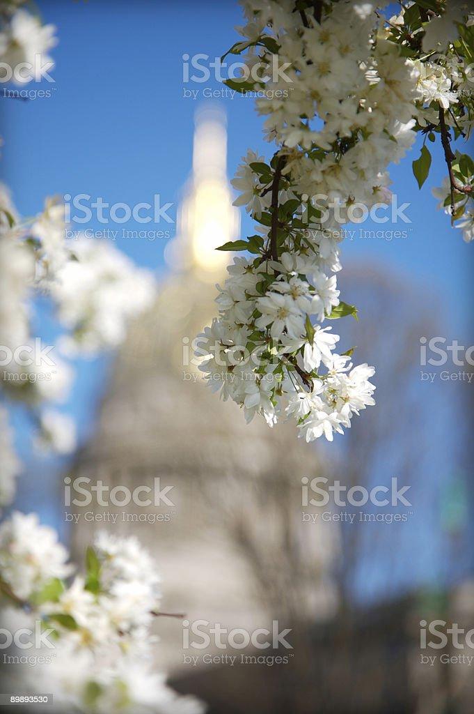 State Capitol durch Blüten Lizenzfreies stock-foto