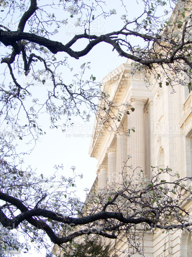 Stately Marble Columned Supreme Court Building in Washington DC framed by Branches stock photo