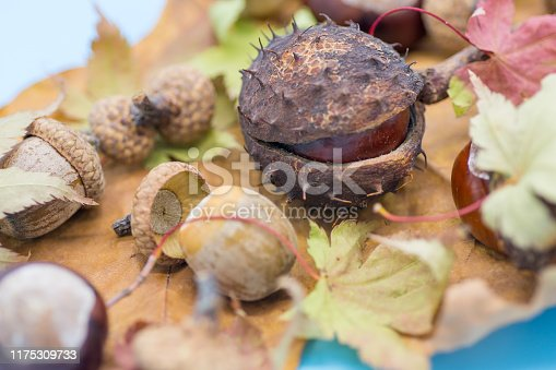 istock static nature of acorns and chestnuts on rusted and yellow leafs autumn concept image 1175309733