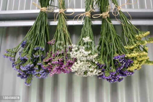 Pink, purple, white, yellow and mauve Statice Limonium sinuatum  flowers hanging to dry in a corrugated iron shed