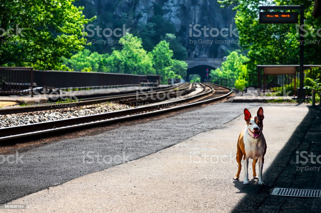 Station Pup royalty-free stock photo