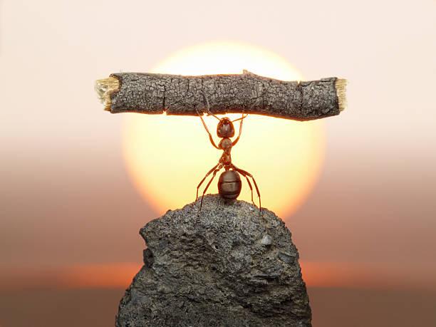 Statue of Labour, ants civilization foto