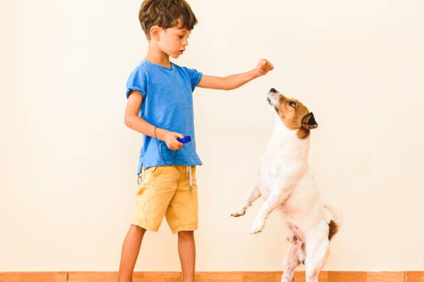 Blijf thuis leren nieuwe vaardigheid concept met jongen opleiding hond trucs met clicker en positieve versterking foto