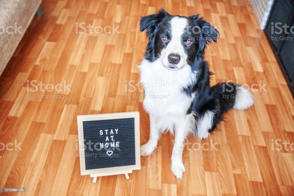 Stay Home Funny Portrait Of Cute Puppy Dog With Letter Board Inscription Stay At Home Word Sitting On Floor New Lovely Member Of Family Little Dog At Home Indoors Pet Care Quarantine