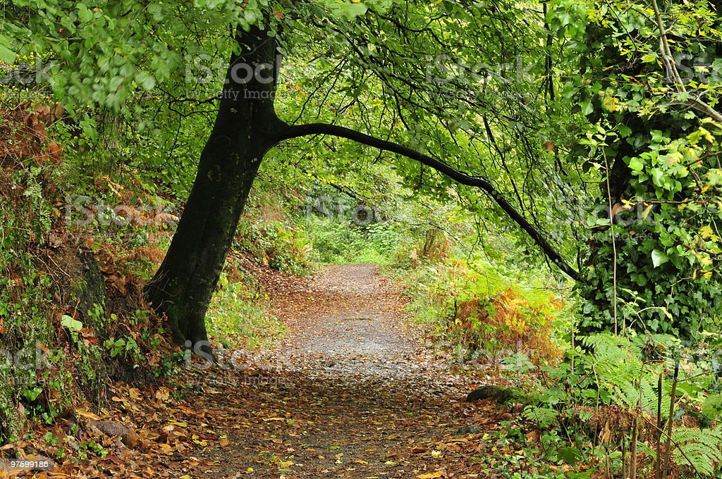 St.Catherine woods,Jersey. royalty-free stock photo