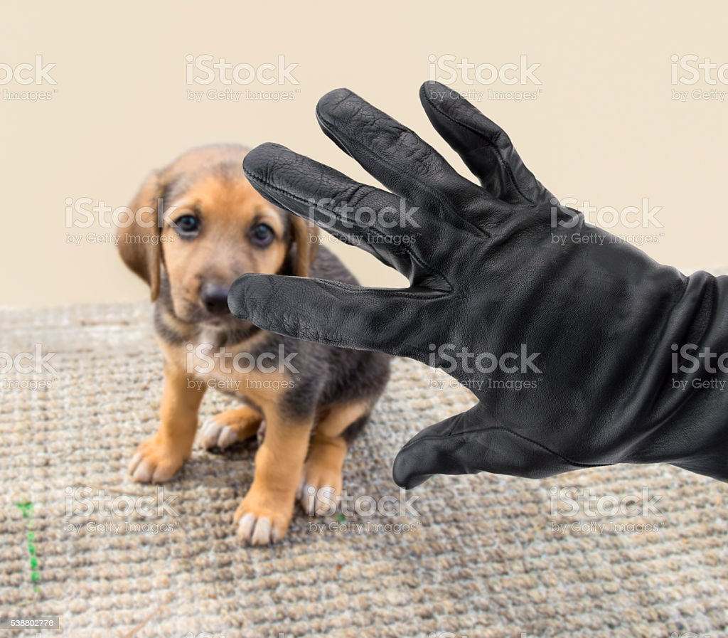 stealing dogs stock photo