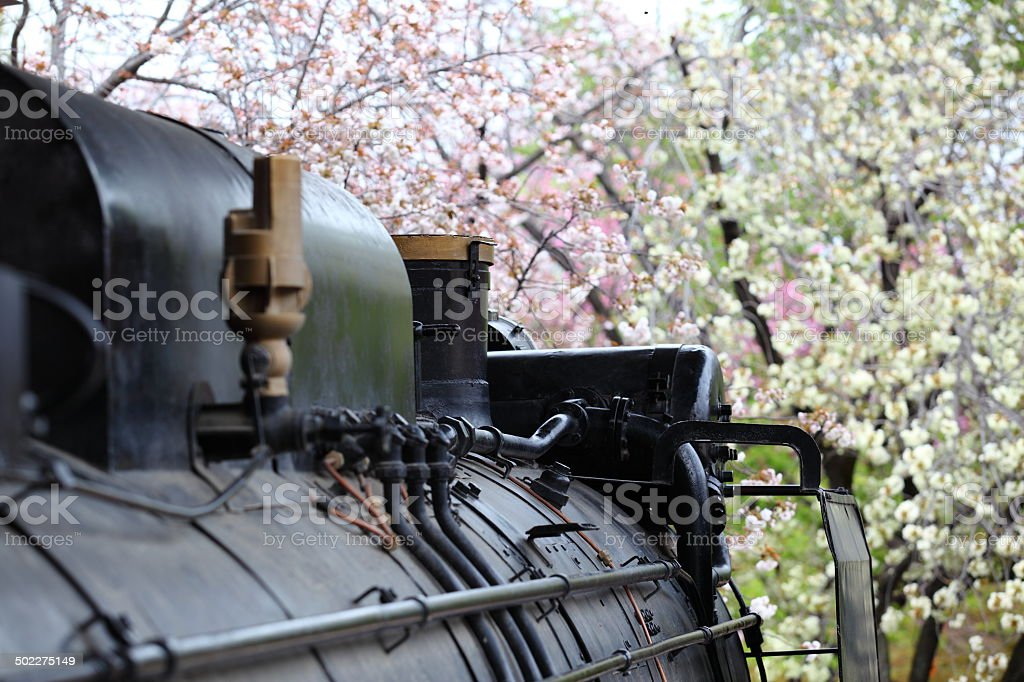 Steam Locomotive and Cherry Trees royalty-free stock photo
