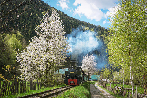 Mocanita Steam Train from Romania in a spring scenery, a local train used for timber transport and tourists.