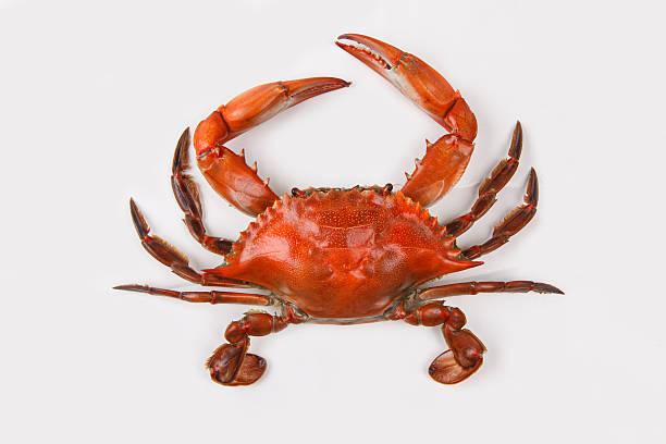 crabe à la vapeur sur fond blanc - crabe photos et images de collection