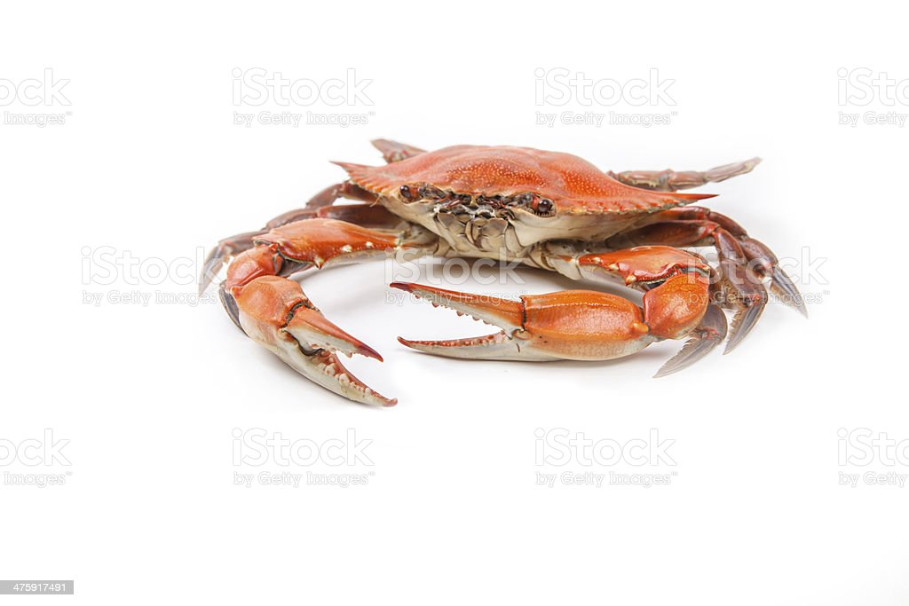 Steamed Blue Crab on white background stock photo