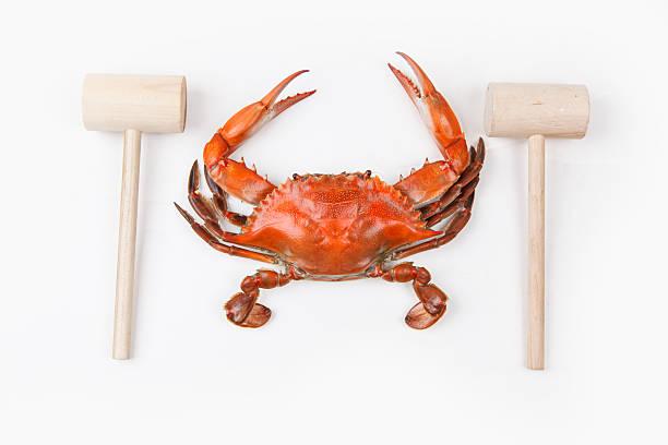 crabe à la vapeur avec maillets croisés sur fond blanc - crabe photos et images de collection