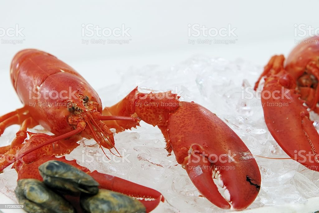 steamed lobster royalty-free stock photo