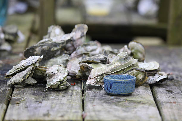 Steamed Oysters stock photo