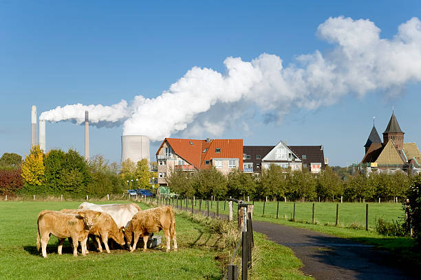 Steaming cooling tower of power station and pasture with cows Pasture with some brown cows in the foreground and coal-fired power station with steaming cooling towers close to town in the background. Location: North Rhine Westfalia, Germany. north rhine westphalia stock pictures, royalty-free photos & images
