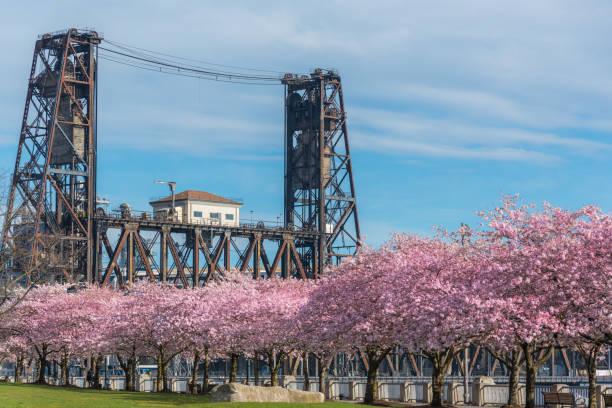 Steel Bridge and spring cherry blossoms, Portland Oregon stock photo