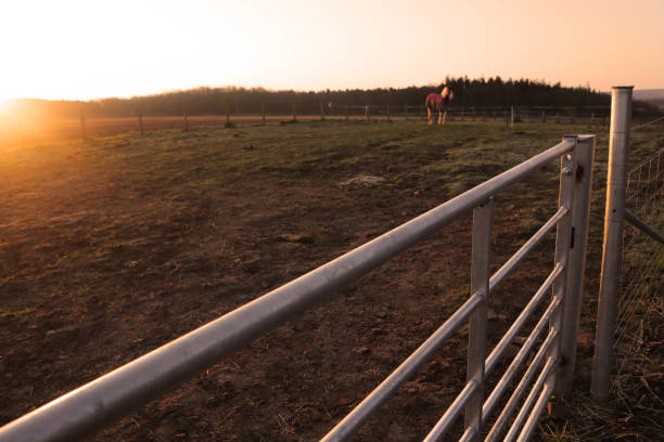 Steel fence next to a horse paddock stock photo