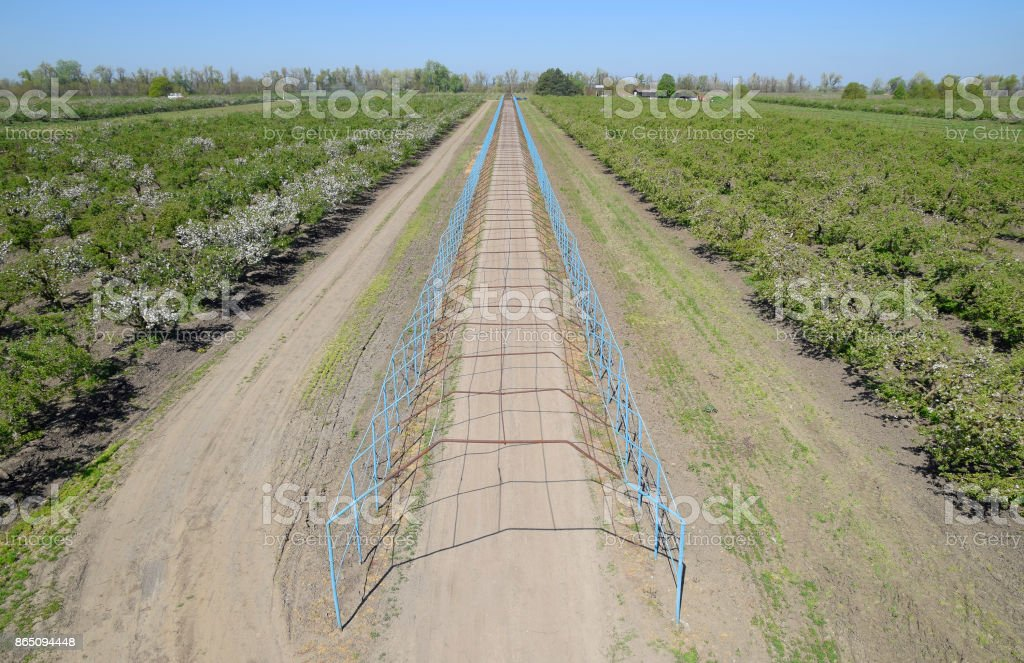 Steel gazebo for grapes over the road in the apple orchard. Fruit garden stock photo
