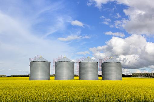 steel grain bins in a canola field