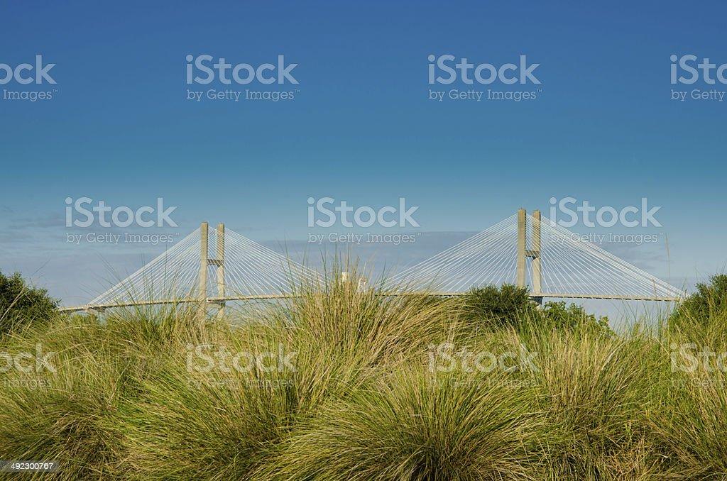 Steel Suspension Bridge Behind Sea Grasses stock photo