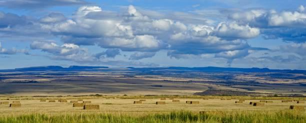 стинс горные стога сена - плато стоковые фото и изображения