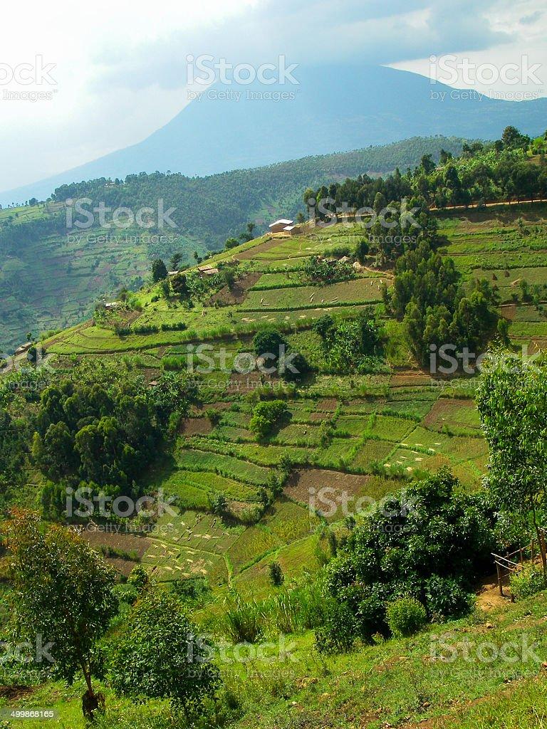 Steep slopes and Intensive Agriculture with Muhabura Volcano Rwanda stock photo