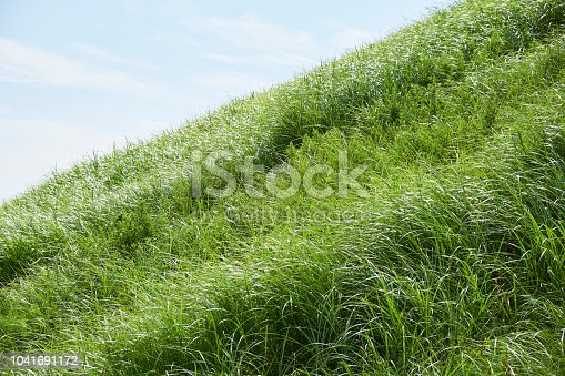 Steeply sloping lawn