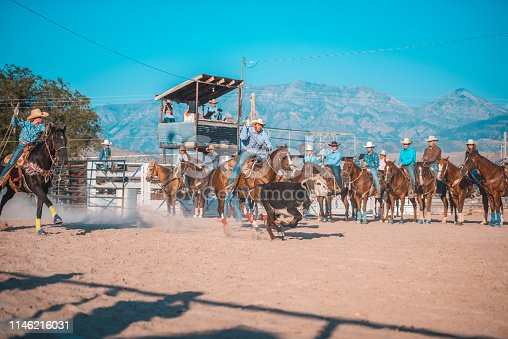 Steer ropers in pursuit on horseback at Utah ranch.