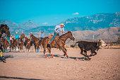 Steer Roping at Rodeo Event in Utah