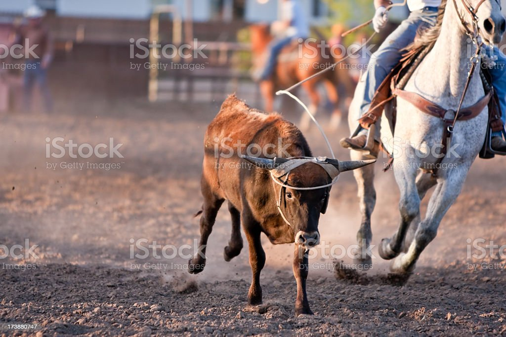 Steer Roping stock photo