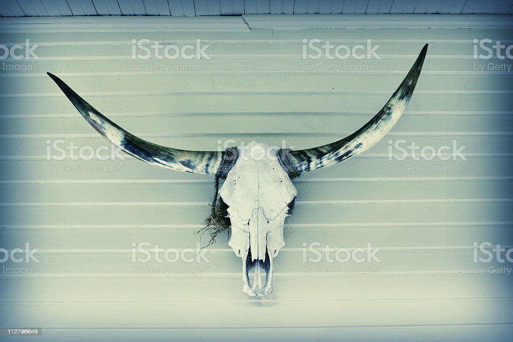 steer skull royalty-free stock photo